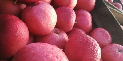 SELL INDUSTRIAL FRUITS FRESH APPLES IDARED, PRICE - AGRICULTURAL ADVERTISEMENTS, Agro-Market24
