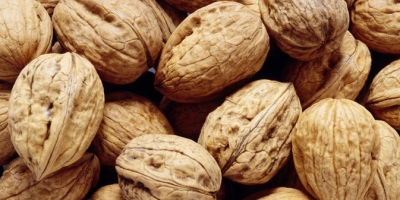 SELL FRESH FRUITS FRESH NUTS WALNUTS, PRICE - AGRICULTURAL ADVERTISEMENTS, Agro-Market24