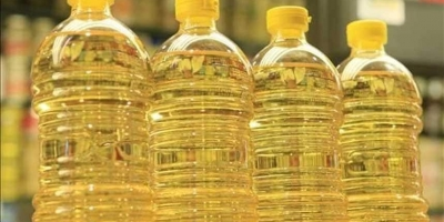 SELLING FRESH OIL PLANTS OIL PLANTS SUNFLOWER, PRICE - AGRICULTURAL ADVERTISEMENTS, Agro-Market24