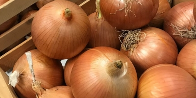SELL FRESH VEGETABLES FRESH ONION, PRICE - AGRICULTURAL EXCHANGE, Agro-Market24