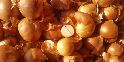 SELL INDUSTRIAL VEGETABLES FRESH ONION, PRICE - AGRICULTURAL ADVERTISEMENTS, Agro-Market24
