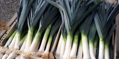 SELL FRESH VEGETABLES FRESH LEEK , PRICE - INTERNATIONAL AGRICULTURAL EXCHANGE, Agro-Market24