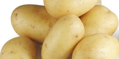 SELL DRIED POTATOES FRESH POTATOES, PRICE - INTERNATIONAL AGRICULTURAL EXCHANGE, Agro-Market24