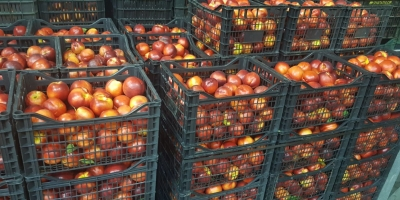 SELL FROZEN FRUITS FRESH PEACHES, PRICE - INTERNATIONAL AGRICULTURAL EXCHANGE, Agro-Market24