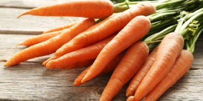 SELL FRESH VEGETABLES FRESH CARROT, PRICE - AGRICULTURAL ADVERTISEMENTS, Agro-Market24