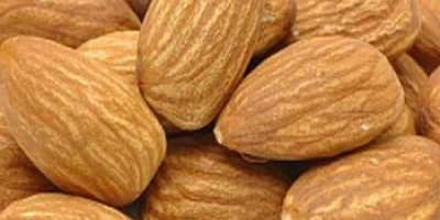 SELL FRESH FRUITS FRESH NUTS ALMONDS, PRICE - INTERNATIONAL AGRICULTURAL EXCHANGE, Agro-Market24