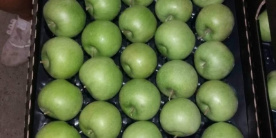 SELL FRESH FRUITS FRESH APPLES GRANNY SMITH, PRICE - AGRICULTURAL EXCHANGE, Agro-Market24