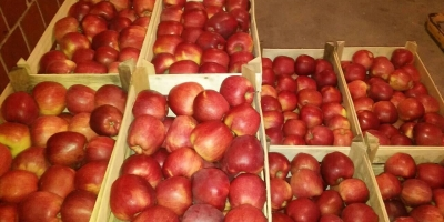 SELL FRESH FRUITS FRESH APPLES RED CHIEF, PRICE - CENY ROLNICZE, Agro-Market24