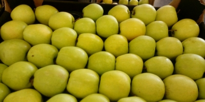 SELL FRESH FRUITS FRESH APPLES IDARED, PRICE - INTERNATIONAL AGRICULTURAL EXCHANGE, Agro-Market24