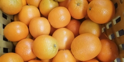 SELL FRESH FRUITS FRESH ORANGES, PRICE - INTERNATIONAL AGRICULTURAL EXCHANGE, Agro-Market24