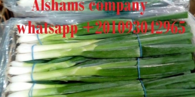 (Spring onion)