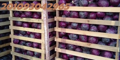 Fresh Green & Red cabbages