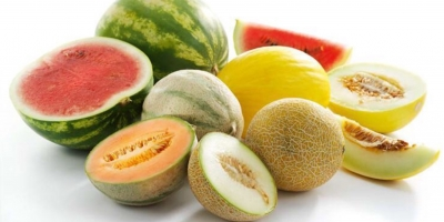 SELL FRESH FRUITS FRESH MELONS, PRICE - INTERNATIONAL AGRICULTURAL EXCHANGE, Agro-Market24