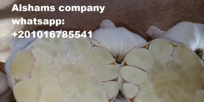 SELL FRESH FRUITS FRESH MANGO, PRICE - INTERNATIONAL AGRICULTURAL EXCHANGE, Agro-Market24