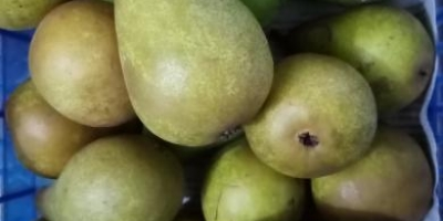 SELL FRESH FRUITS FRESH APPLES, PRICE - AGRICULTURAL EXCHANGE, Agro-Market24