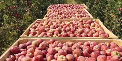 Largest seller of fresh apples  world wide.