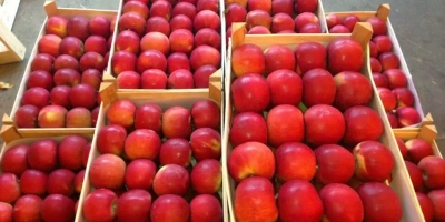 SELL FRESH FRUITS FRESH APPLES IDARED, PRICE - AGRICULTURAL EXCHANGE, Agro-Market24