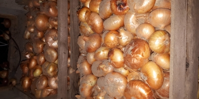 SELL INDUSTRIAL VEGETABLES FRESH ONION, PRICE - AGRICULTURAL EXCHANGE, Agro-Market24