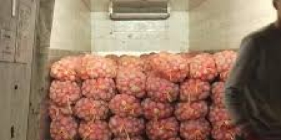 SELL FRESH POTATOES FRESH POTATOES, PRICE - INTERNATIONAL AGRICULTURAL EXCHANGE, Agro-Market24