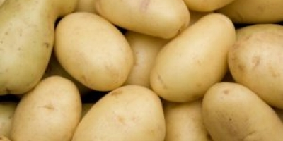Agric Dynamics(Karfasland) Offers quality Potatoes ready for export