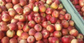SELL FRESH FRUITS FRESH APPLES JONAGORED, PRICE - CENY ROLNICZE, Agro-Market24