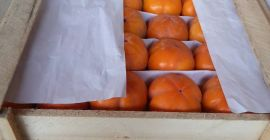 SELL FRESH FRUITS FRESH PERSIMMON, PRICE - AGRICULTURAL EXCHANGE, Agro-Market24