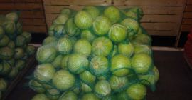 SELL FROZEN VEGETABLES FRESH CABBAGE WHITE, PRICE - AGRICULTURAL ADVERTISEMENTS, Agro-Market24
