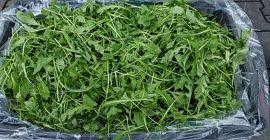 SELL FRESH HERBS  HERBS RUCOLA , PRICE - AGRICULTURAL ADVERTISEMENTS, Agro-Market24