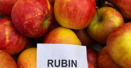 SELL FRESH FRUITS FRESH APPLES RUBIN , PRICE - AGRICULTURAL EXCHANGE, Agro-Market24