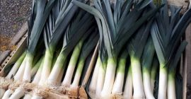 SELL DRIED VEGETABLES FRESH LEEK , PRICE - AGRICULTURAL EXCHANGE, Agro-Market24