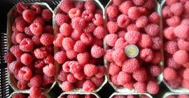 SELL FRESH FRUITS FRESH RASPBERRIES, PRICE - INTERNATIONAL AGRICULTURAL EXCHANGE, Agro-Market24