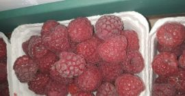 SELL INDUSTRIAL FRUITS FRESH RASPBERRIES, PRICE - INTERNATIONAL AGRICULTURAL EXCHANGE, Agro-Market24
