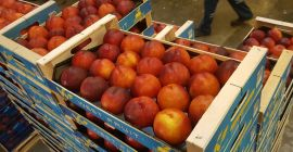 SELL FRESH FRUITS FRESH PEACHES, PRICE - CENY ROLNICZE, Agro-Market24