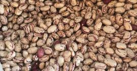 SELL FRESH VEGETABLES FRESH BEAN SHELLED, PRICE - AGRICULTURAL ADVERTISEMENTS, Agro-Market24