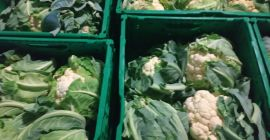 SELL DRIED VEGETABLES FRESH CAULIFLOWER, PRICE - CENY ROLNICZE, Agro-Market24