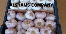 - Fresh Garlic