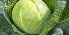 SELL FRESH VEGETABLES FRESH CABBAGE WHITE, PRICE - INTERNATIONAL AGRICULTURAL EXCHANGE, Agro-Market24