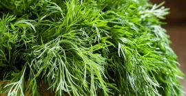 Herbs at higher level of quality and best compitative price