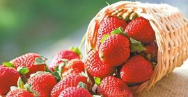 BUY FRESH FRUITS FRESH STRAWBERRIES, PRICE - INTERNATIONAL AGRICULTURAL EXCHANGE, Agro-Market24