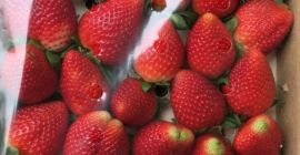 SELL INDUSTRIAL FRUITS FRESH STRAWBERRIES, PRICE - CENY ROLNICZE, Agro-Market24
