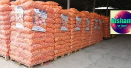 Origin : Egypt 