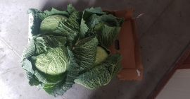 SELL FROZEN VEGETABLES FRESH CABBAGE SAVOY CABBAGE , PRICE - CENY ROLNICZE, Agro-Market24