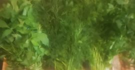 SELL FRESH HERBS  HERBS PARSLEY, PRICE - CENY ROLNICZE, Agro-Market24