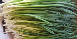 SELL FRESH VEGETABLES FRESH CHIVE, PRICE - AGRICULTURAL EXCHANGE, Agro-Market24