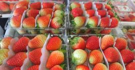 SELL FROZEN FRUITS FRESH WILD STRAWBERRIES, PRICE - INTERNATIONAL AGRICULTURAL EXCHANGE, Agro-Market24