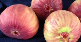 SELL FROZEN FRUITS FRESH FIGS, PRICE - CENY ROLNICZE, Agro-Market24