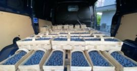 SELL FROZEN FRUITS FRESH BLUEBERRY, PRICE - INTERNATIONAL AGRICULTURAL EXCHANGE, Agro-Market24