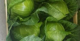 SELL FRESH VEGETABLES FRESH CABBAGE YOUNG, PRICE - INTERNATIONAL AGRICULTURAL EXCHANGE, Agro-Market24