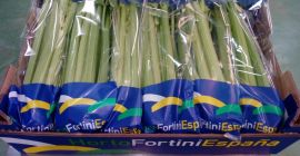 SELL FRESH VEGETABLES FRESH CELERY, PRICE - INTERNATIONAL AGRICULTURAL EXCHANGE, Agro-Market24