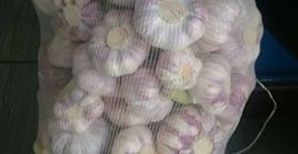 SELL FRESH VEGETABLES FRESH GARLIC, PRICE - AGRICULTURAL EXCHANGE, Agro-Market24